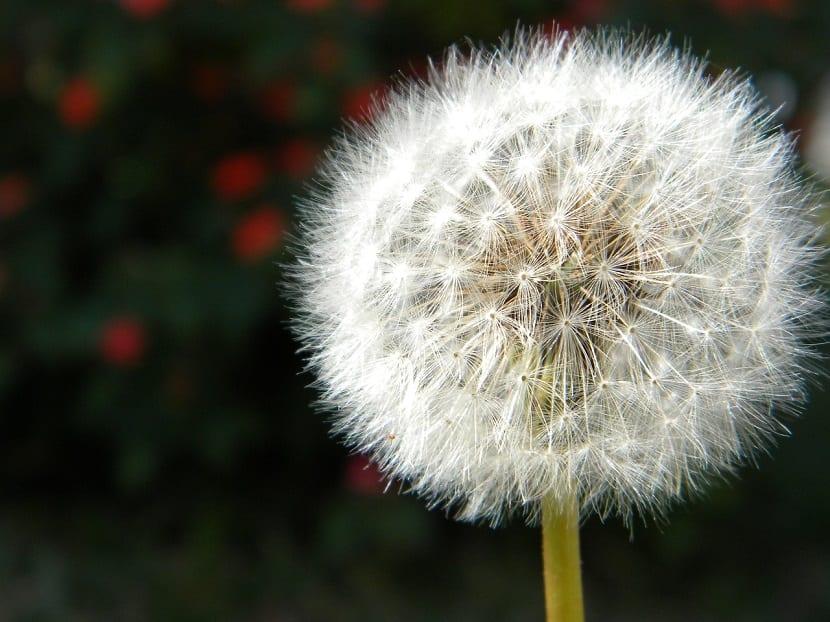 las semillas tienen diversos mecanismos de dispersión