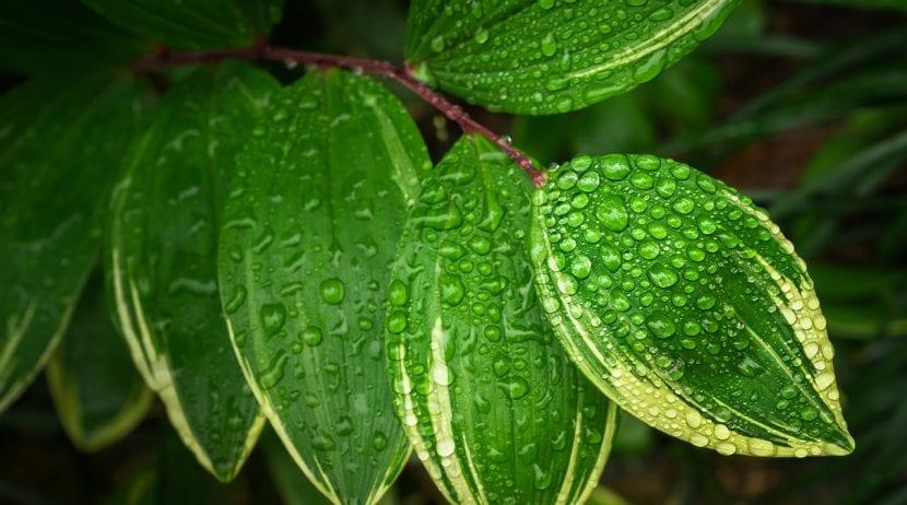 Hojas de una planta