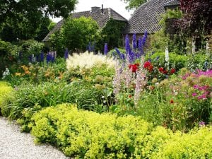 Precioso jardín con plantas y flores