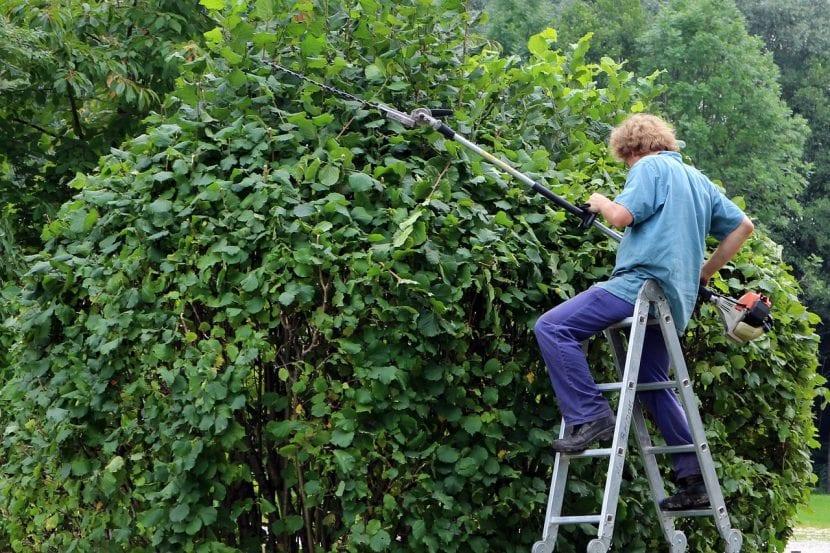 Jardinero podando setos
