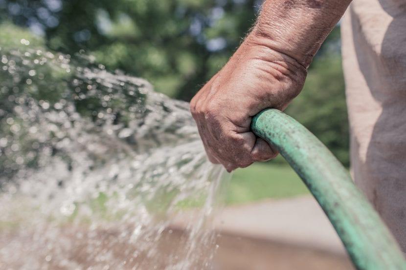 Jardinero regando con manguera