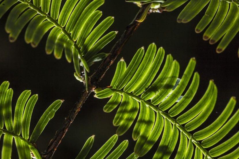 Planta vista por la noche