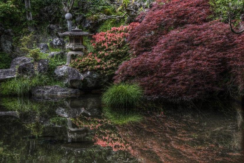 Plantas en jardín japonés
