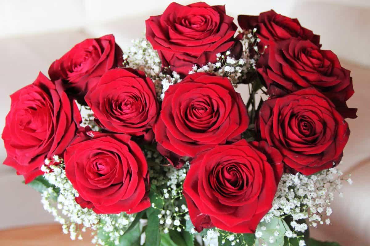 Las rosas son flores que se pueden conservar