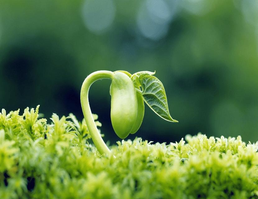 las semillas son muy importantes para la conservación de las plantas