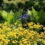 Verano en un jardín