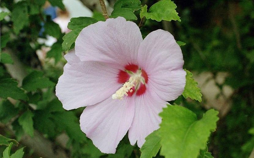 se mantiene lleno de flores durante todo este mes de julio y el de agosto.