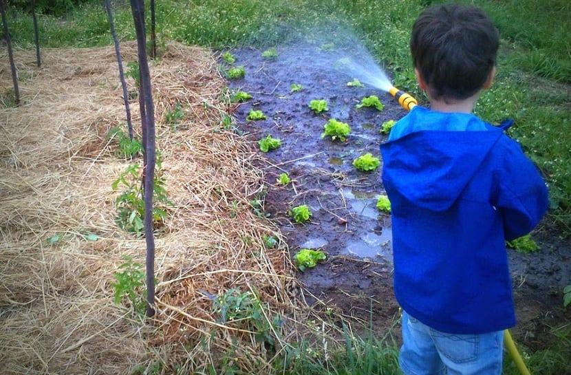 acolchado del terreno para evitar exceso de evaporacion