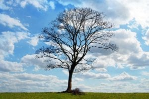 Árbol sin hojas en invierno