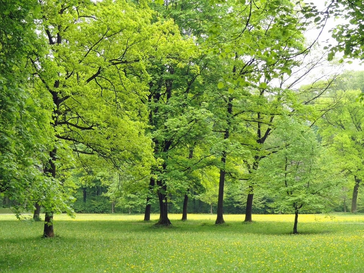 Árboles en un parque de Alemania