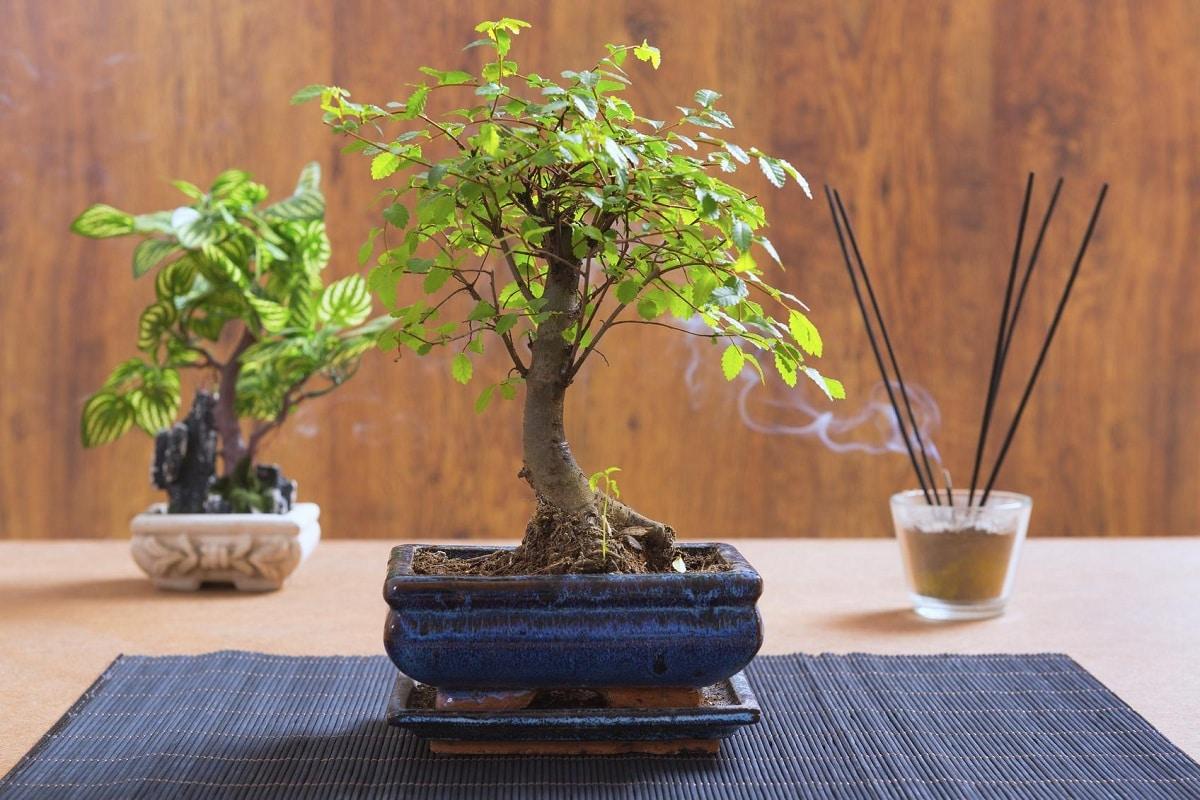 Hay que podar a los bonsais de vez en cuando