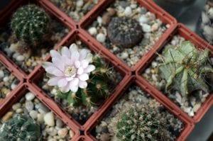 Colección de cactus