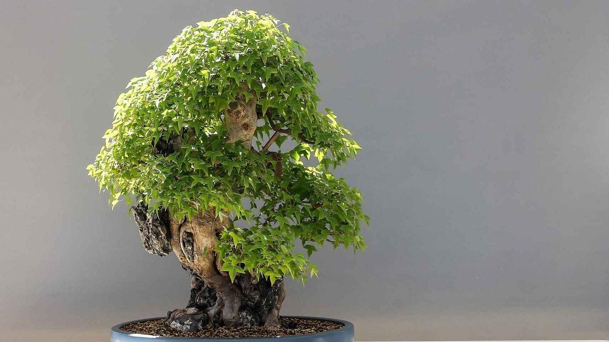 Los árboles tienen crecimiento apical
