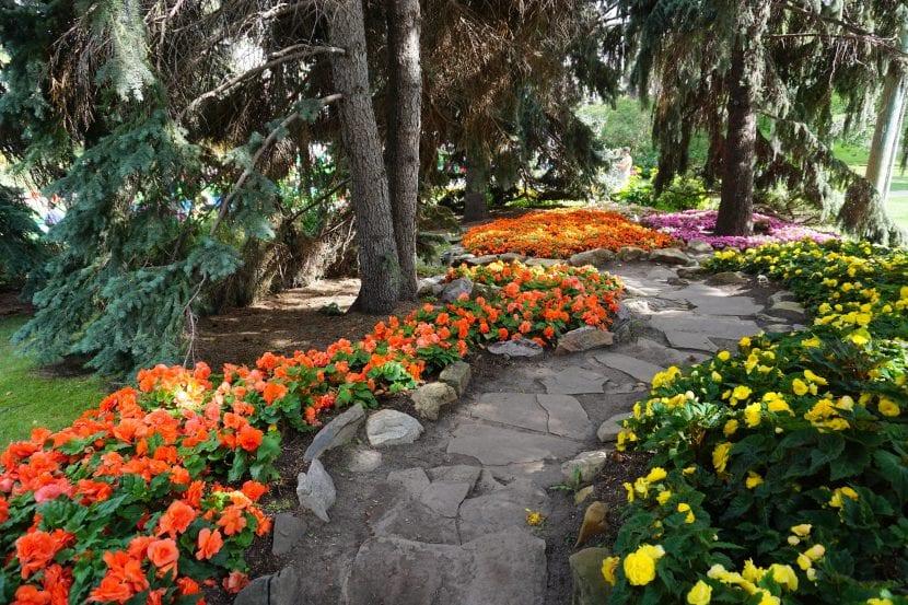 Flores en un jardín