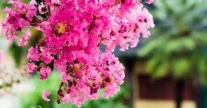 las plantas que florecen en el mes de julio