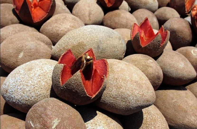 fruta del mamey