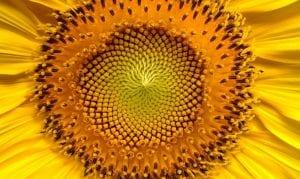 proteger plantas y flores del calor