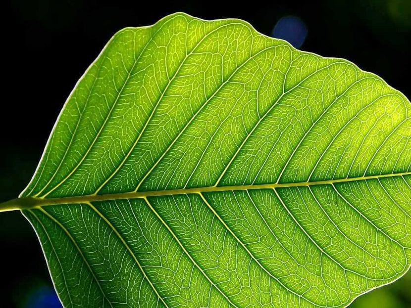 Hoja de planta en detalle