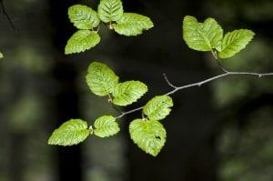 Las hojas proporcionan oxígeno