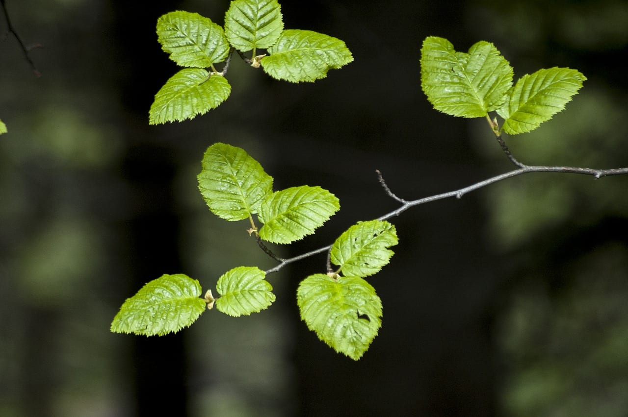 Consejos de jardiner a ecol gica for Jardineria ecologica