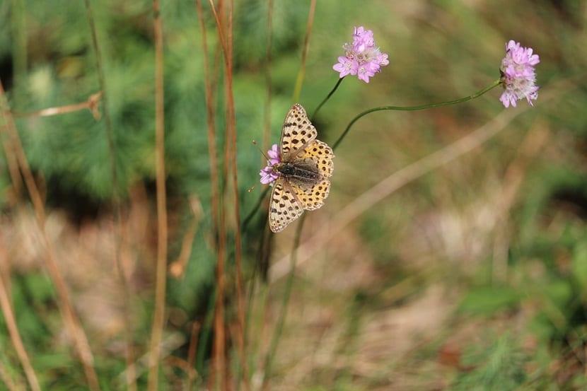 insectos polinizan la flor