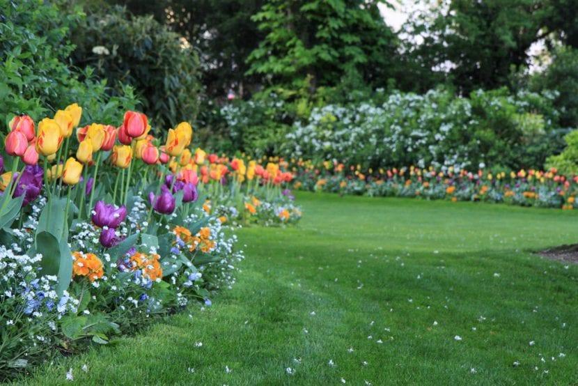 Parterre de tulipanes