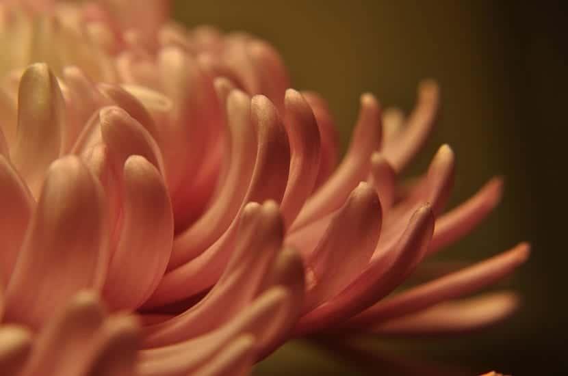 los petalos son parte de una flor