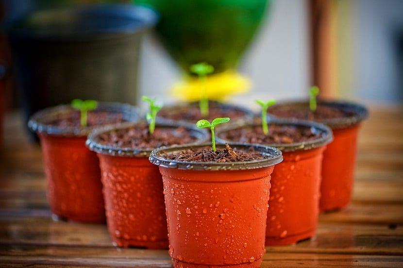 regar nuestras plantas en macetas