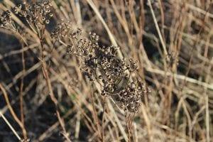 plantas secas y muertas