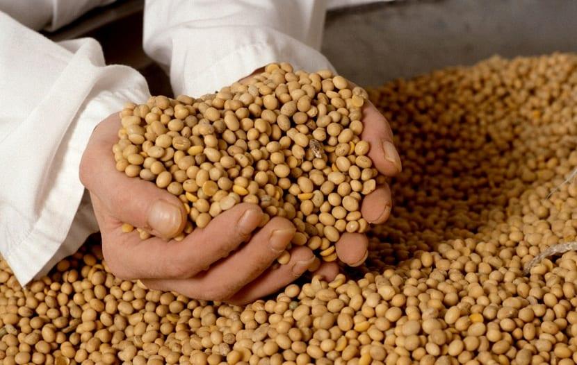 las semillas transgénicas pueden paliar el hambre en el mundo