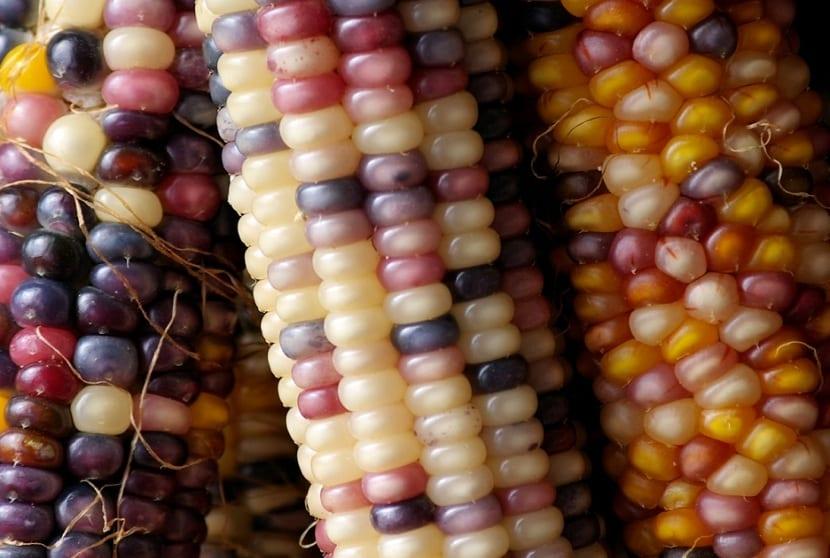 las semillas transgénicas son extendías mundialmente