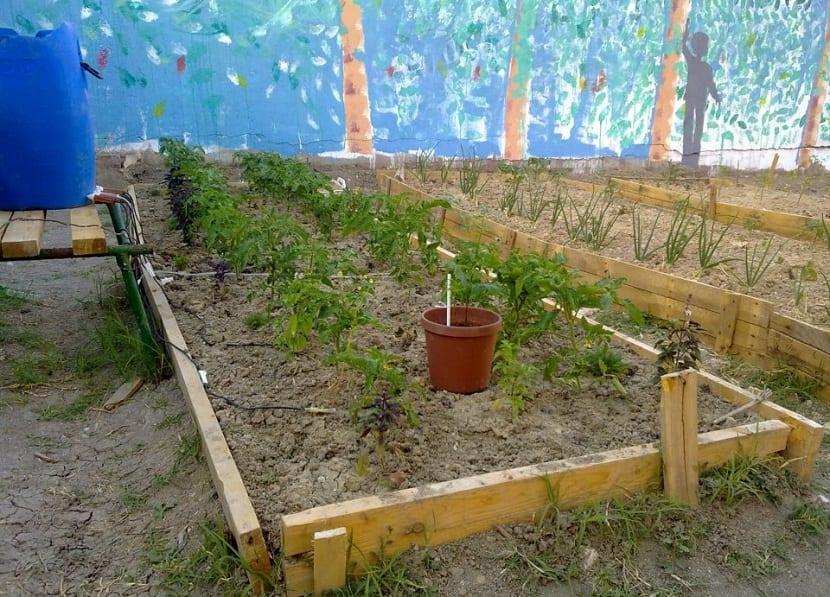 los bancales ofrecen buenas ventajas en los huertos
