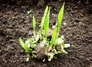 bombas de semillas en jardin