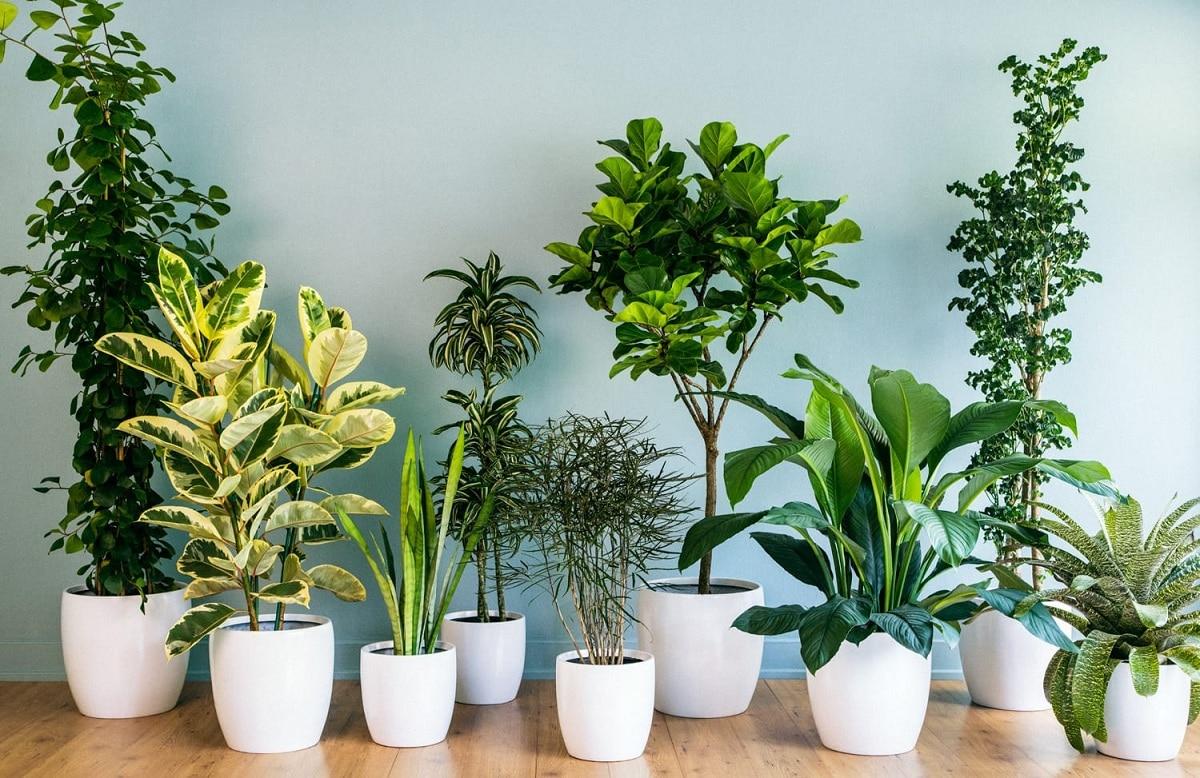 como podar plantas de interior