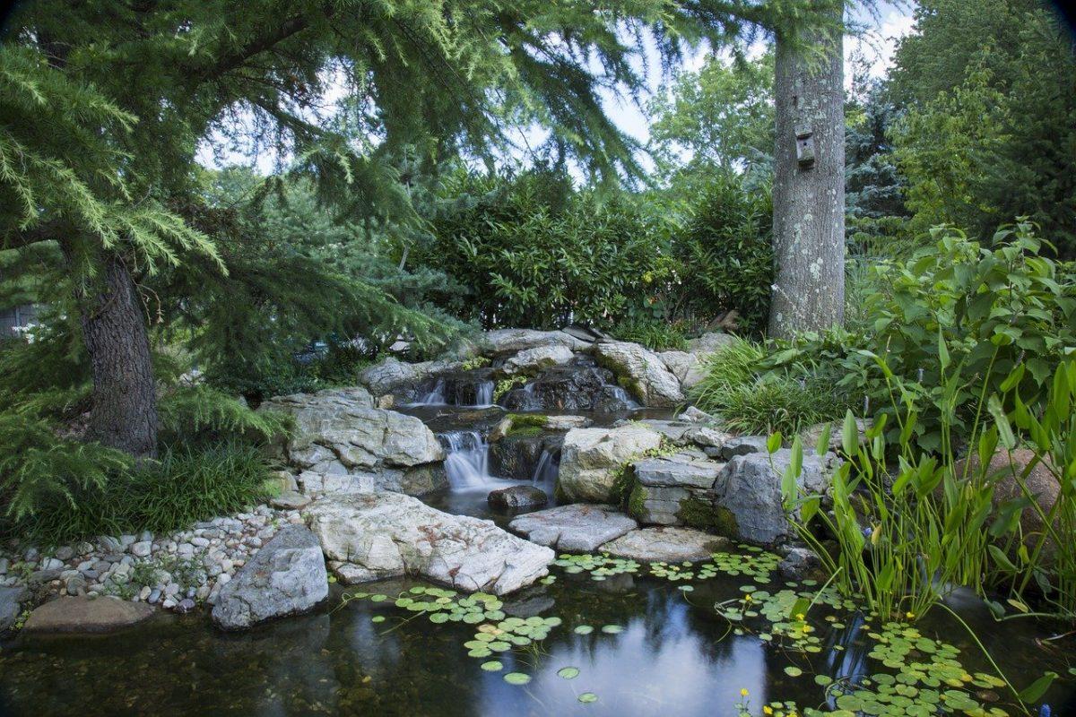 Hay muchas plantas acuáticas que se ponen en los estanques