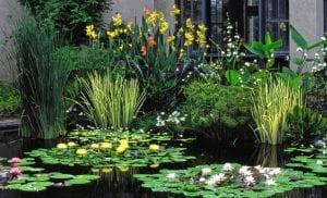 plantas de estanques