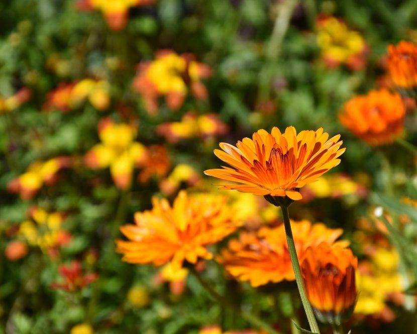 Flores naranjas en un jardín