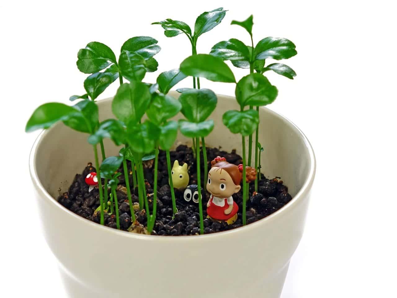 C mo cultivar hierbas en maceta - Hierba luisa en maceta ...