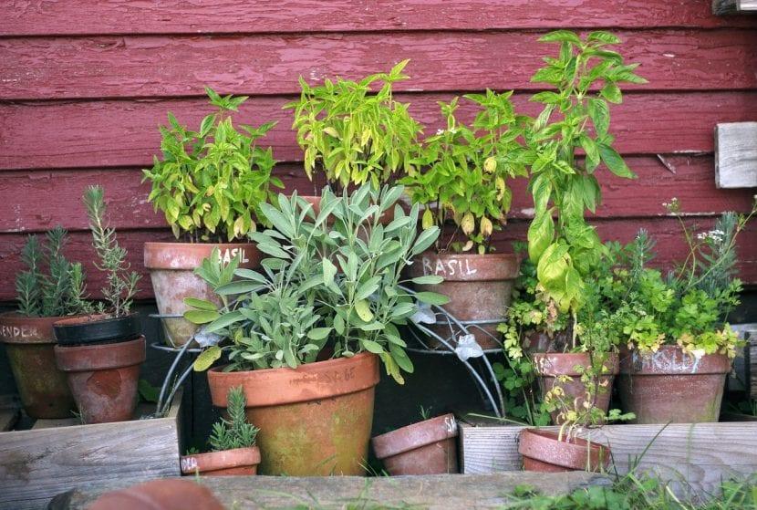 Conjunto de plantas en maceta
