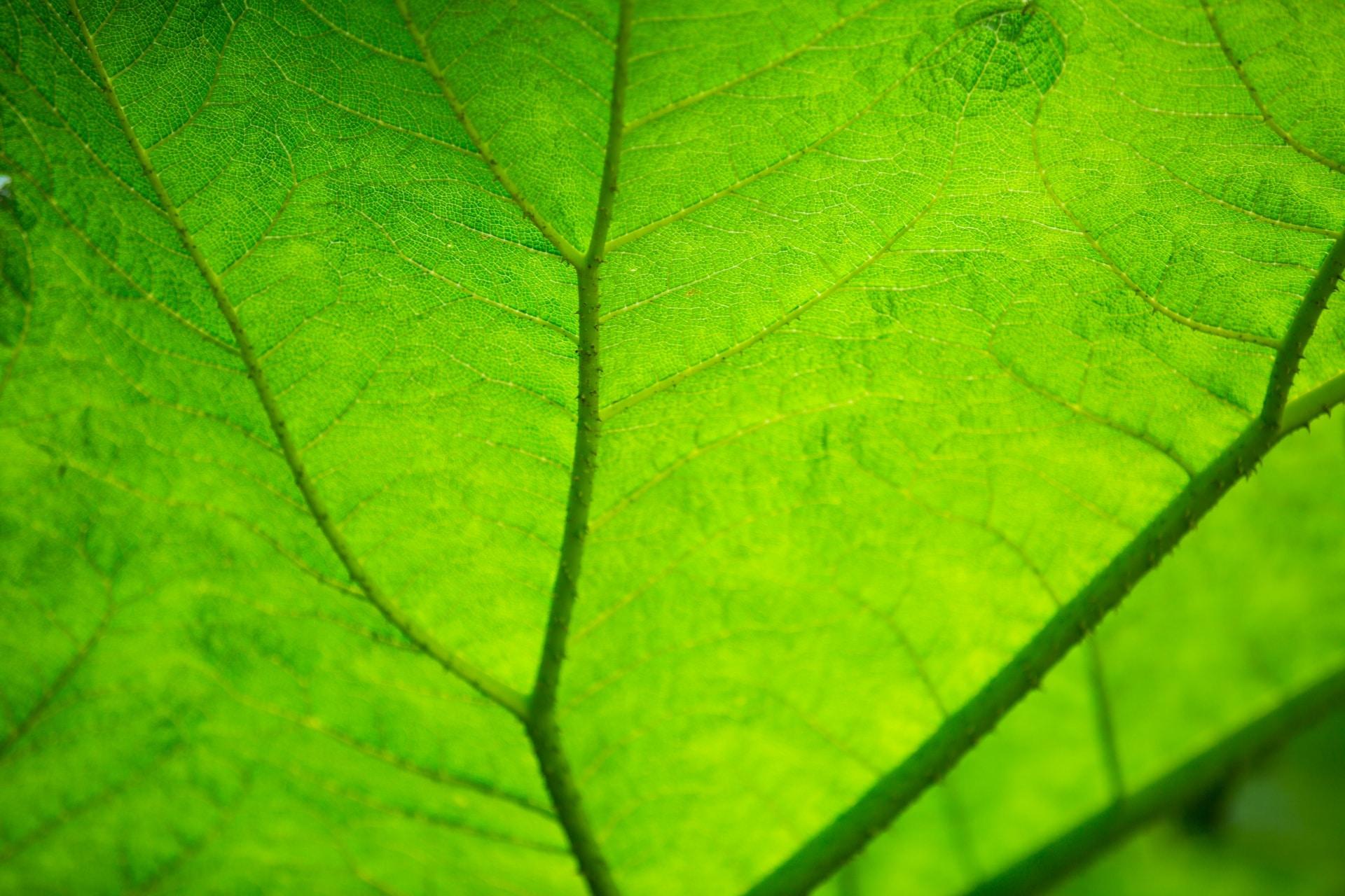 Las plantas realizan distintas funciones