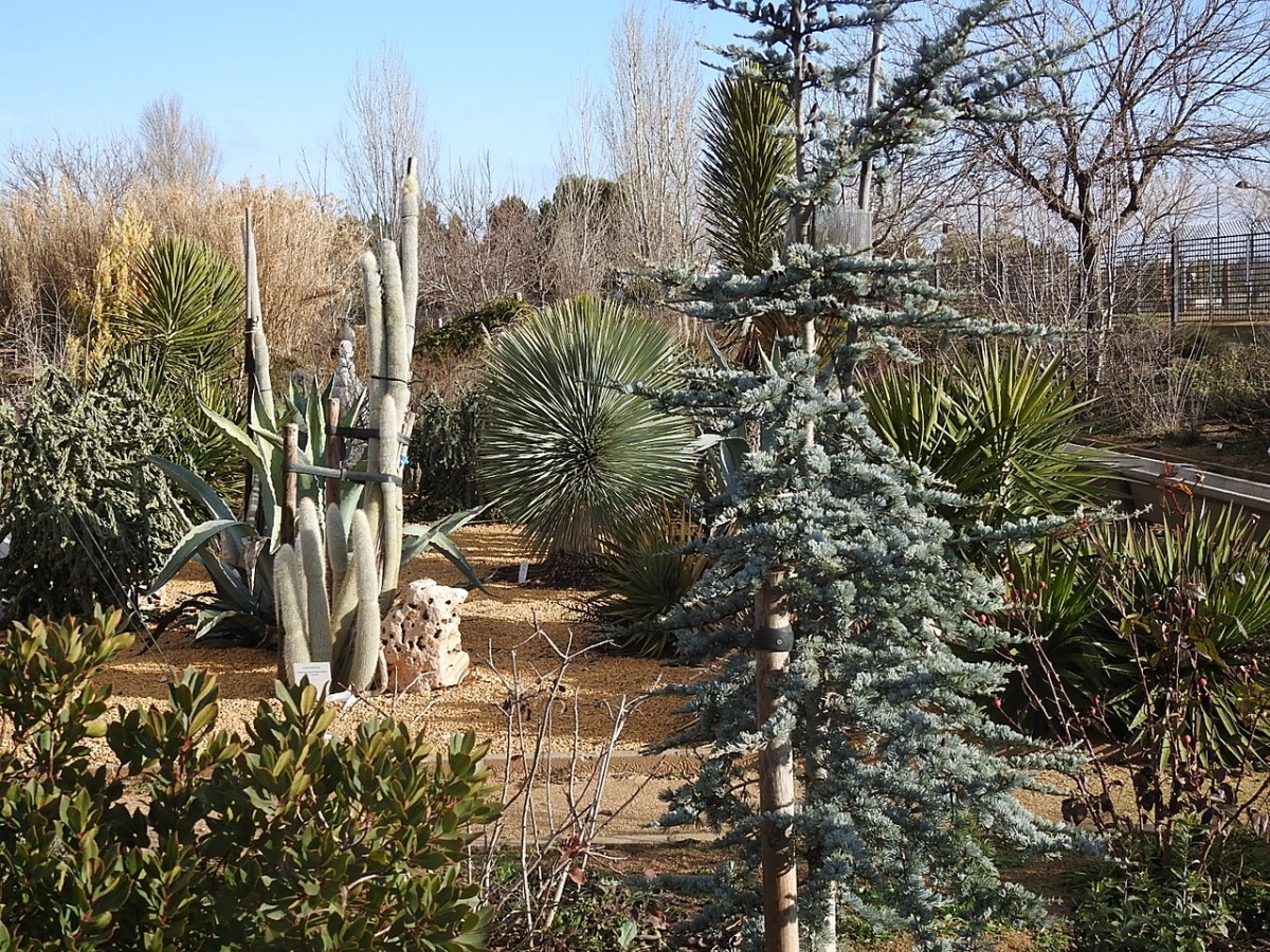 El Jardín Botánico de Castilla la Mancha se encuentra en España