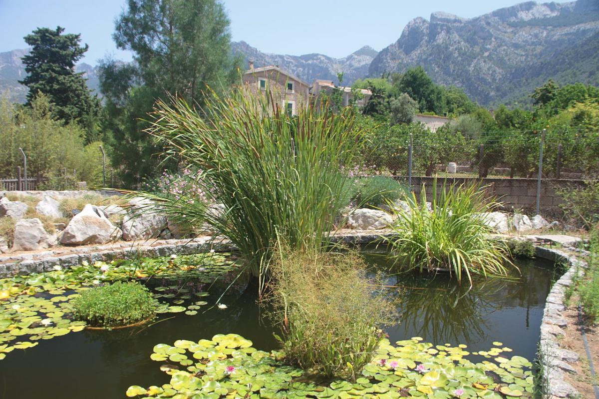 El Jardín Botánico de Soller es un jardín conservacionista