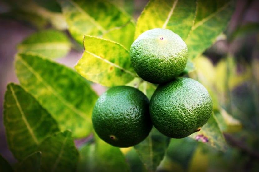 La irrigación adecuada puede aumentar la productividad de frutos