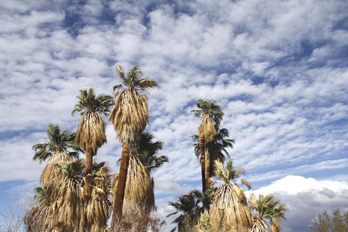 Las palmeras necesitan agua