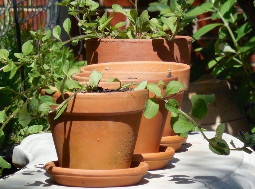 plantas en macetas de barro