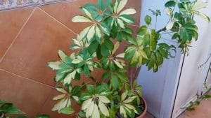 poda de plantas de interior