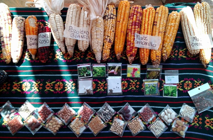 almacen semillas organicas