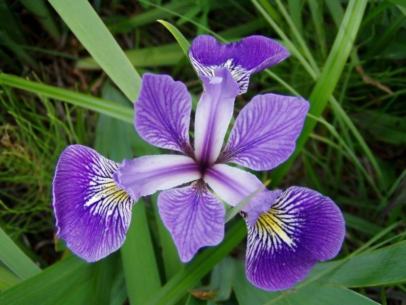 6 Plantas Con Flores Moradas Que Son Una Delicia Para La Vista