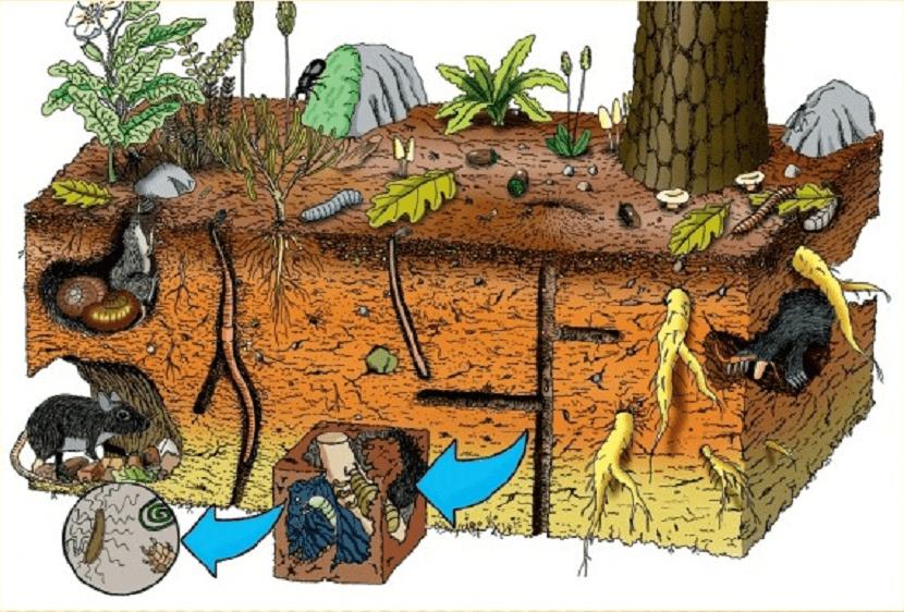 los organismos vivos alteran el suelo
