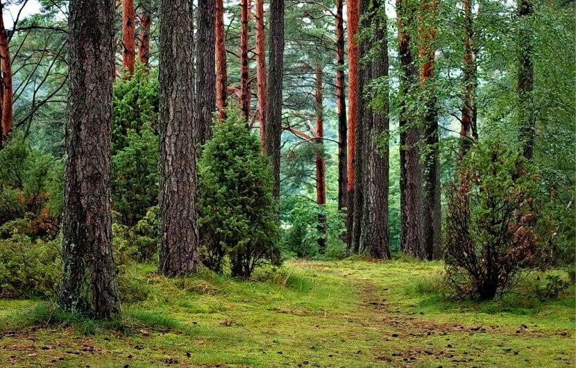Bosque de climas templados